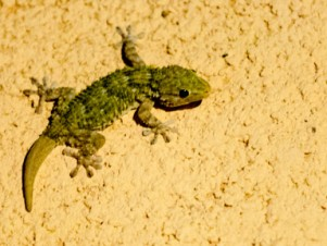 gecko-header